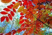 一気に秋の景色に - ハーブガーデン便り