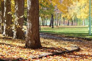 地域の魅力度・・・2016年10月20日 - かるさんの日々