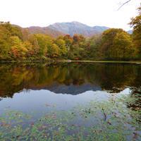 刈込池の紅葉情報(福井県大野市) - 福井山歩会