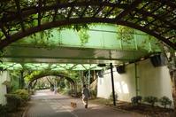 南砂緑道公園を歩く - kenのデジカメライフ