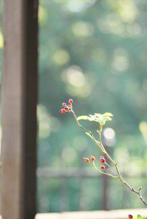 10月の空気感と想う - 「あなたに似た花。」