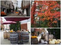 16年10月22日 八ヶ岳で秋満喫♪ - 旅行犬 さくら 桃子 あんず 日記