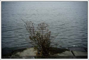 千住散歩-479 - Camellia-shige Gallery 2