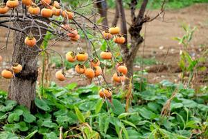 収穫の秋 - フォト de パラダイス