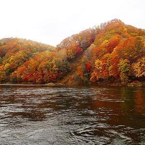 <Episode #292> 秋色の尻別川とサーモンのいたずら - slow fishing ver.2