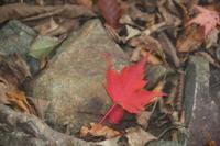 【霧まみれ】西丹沢自然教室からつつじ新道経由>檜洞丸>石棚山から箒沢へ - のんびりとやまを楽しみましょう