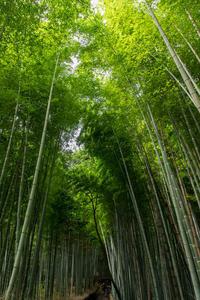竹林in嵐山 - More than now