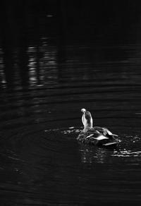 『寒くなって来た』 - 吐息 写真館