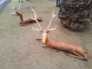 伊豆の鹿もどき - 中伊豆野音