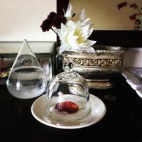 最近買ったお気に入りたち〜葉っぱブローチ・本・CD〜 -  『 紙とえんぴつ。』   kamacosan. 糸とビーズのアクセサリー