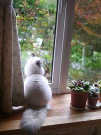 だんだん紅葉が進んで来ました。 - 猫の銅版画