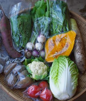 今週の野菜セット(10/25~10/29着) - キシノウエンの 今日のてしごと