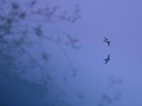多摩川下見 - TACOSの野鳥日記