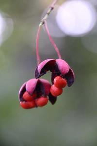 赤い実と小さな蝶と、カワセミ - 子猫の迷い道Ⅱ