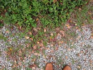 脱け殻 - おやつ屋   草の芽