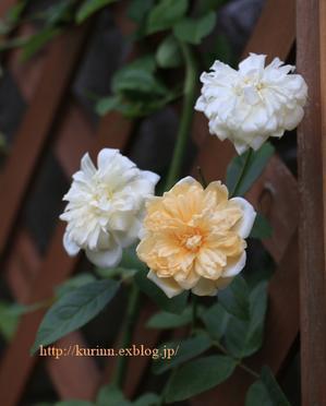 夏と秋の狭間で・・・秋明菊と庭の花 - miyorinの秘密のお庭