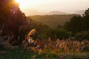 秋深まり、庭仕事も佳境に入る?!来春の花盛りを夢見て・・・。 - Martin Island ~空と森と水と~