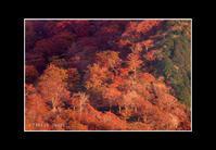 2016年10月24日 紅葉の冠山山腹 - Painter,with nature-Photo