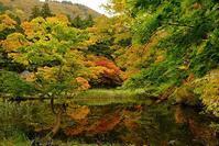 浄仙寺の赤と緑 3題 - へっぽこな・・