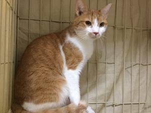 【お預かり猫】外は小春日和のぽっかぽっか。 - 猫と一緒に。