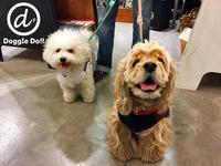 Hello hana & mame !! - Doggie Do!! / good dog and hello cat !!