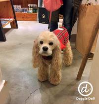 Hello Tabasa!! - Doggie Do!! / good dog and hello cat !!