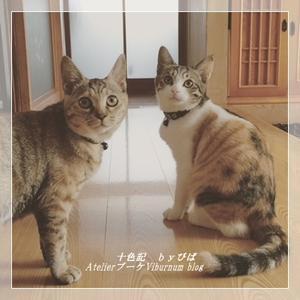 猫ネタ♪神! - 十色記