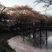 🌸地域の桜まつり🌸 - はるなつあきふゆ  Fun every day