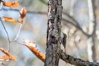 秋です - 趣味の野鳥撮影