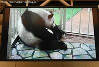 2016年10月 白浜パンダ見隊 その6 - ハープの徒然草