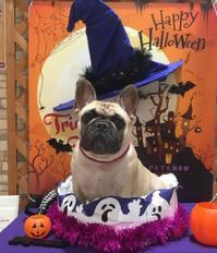 Happy Halloween ❤︎ - ぶりのつぶやき