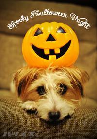 Spooky Halloween Night - ハツイヌ。