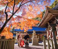 四季を感じながら丁寧に暮らすために知っておくべき日本の年間行事・イベントのおさらい【11月編】 - 暮らしノート