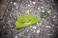 葉っぱと赤い実で♪/びっくり~!ハンドクリームではなく・・/ナナカマドとピラカンサの実 - DOUBLE RAINBOW