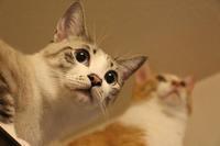 競争相手 - ぎんネコ☆はうす