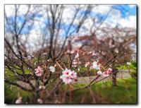 四季桜。 - 気まぐれフォト