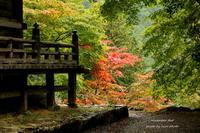 秋探し ~紅葉 - 静かな時間