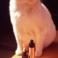 penny mod  derringer と猫 - source5 vape fuel