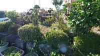 パラ仲間の庭の手入れ - 空の旅人