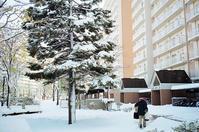 今日の積雪と大学院指導生の発表資料チェック - 照片画廊