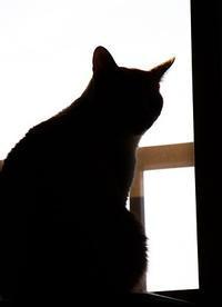 久々のシルエットクイズ - ぎんネコ☆はうす