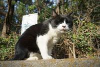 ノラちゃん - ネコと裏山日記