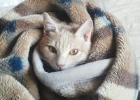 猫、あったまる… - 侘助つれづれ
