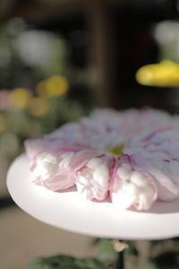 kiku  komorebi - 花は桜木、