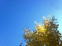 寒い冬も暖かなカシミア・マフラーです。 - 'k'not ordinary