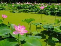 南条花はす公園 - 徒然彩時記