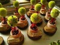 ミニチュアトピアリー。 - 手作り雑貨&観葉植物 kinomi