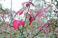 秋色のテッツィオ山、ペルージャ - ペルージャ楽しく美しいイタリア語・日本語屋 なおこのブログ - Fotoblog da Perugia