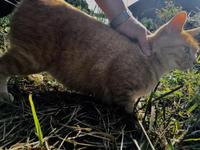 New generation - COMPLEX CAT