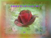 フォト575rm1402『 冬薔薇希望は捨てぬ死に際も 』 - 老仁のハッピーライフ